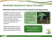 Slide5.PNG lesson3 180x130 - What Is Herbicide Resistance?