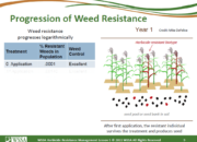 Slide9.PNG lesson5 180x130 - Herbicide-resistant Weeds Training Lessons