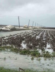 Flooded Cotton Fields - Cottonseed Supply Stable Despite Hurricane Events